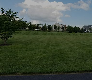 Turf Care & Integrated Pest Management